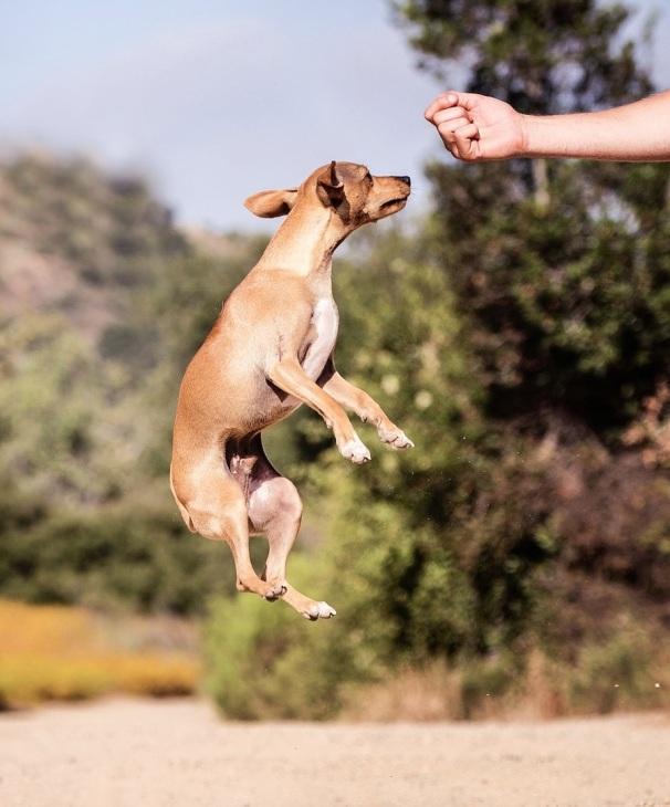 DogTraining.jpg